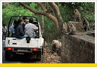 Tour to Ranthambore